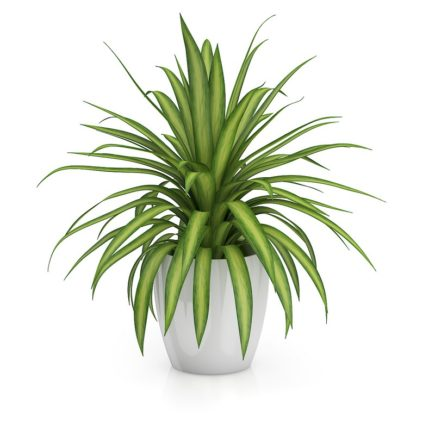 3d small plant