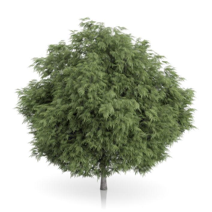 3d tree free