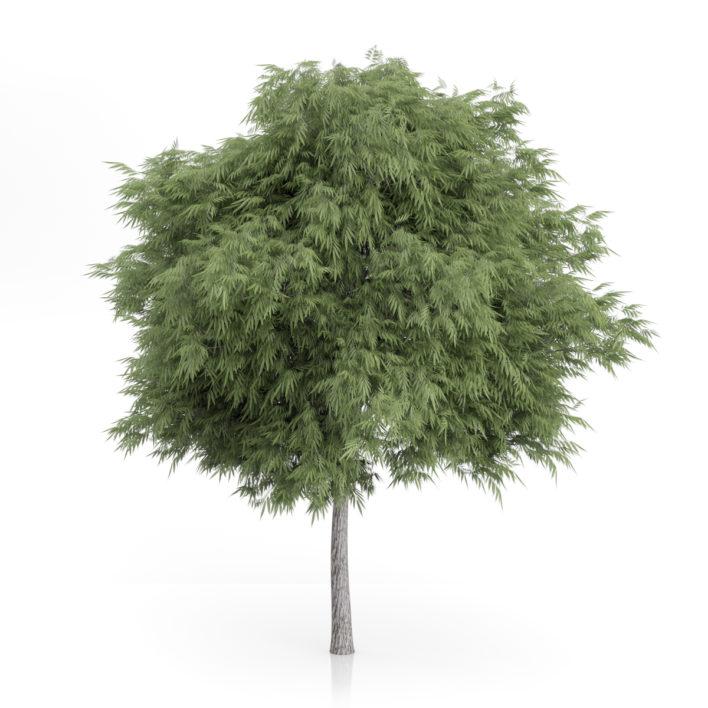 3d tree 2 free