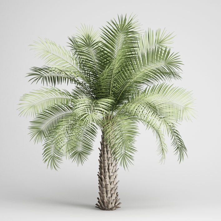 3D Butia Yatay Palm