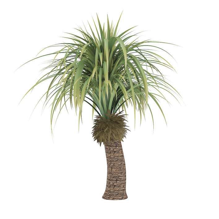 3d small palm tree