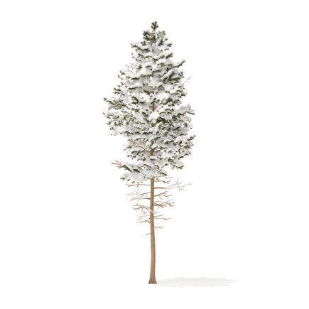 Pine Tree with Snow 3D Model